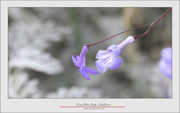 _MG_6969-1.jpg